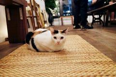 Gato que se sienta en las esteras de la armadura Imágenes de archivo libres de regalías