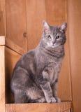Gato que se sienta en pasos de madera rústicos Foto de archivo