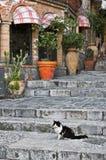Gato que se sienta en pasos de progresión del callejón Fotos de archivo libres de regalías