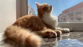 Gato que se sienta en
