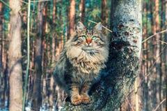 Gato que se sienta en un árbol de abedul Fotografía de archivo libre de regalías