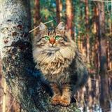 Gato que se sienta en un árbol de abedul Fotos de archivo