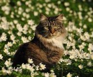 Gato que se sienta en un prado de la flor Imagen de archivo libre de regalías