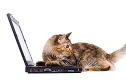 Gato que se sienta en una computadora portátil foto de archivo