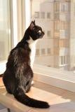 Gato que se sienta en una repisa de la ventana Foto de archivo libre de regalías