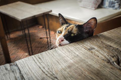 Gato que se sienta en una silla y que espera un poco de comida foto de archivo