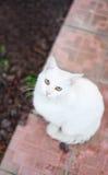 Gato que senta e que olha acima a câmera Fotos de Stock Royalty Free