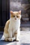 Gato que senta-se e que relaxa exterior Imagem de Stock Royalty Free