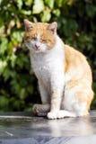 Gato que senta-se e que relaxa exterior Fotos de Stock Royalty Free