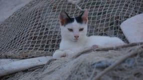Gato que senta-se em redes da pesca Foto de Stock