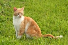 Gato que senta-se em um campo da grama fotos de stock