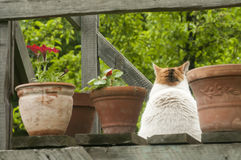 Gato que senta-se entre potenciômetros das flores Imagens de Stock Royalty Free