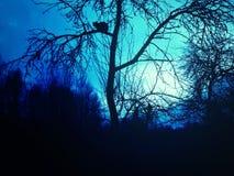 Gato que senta-se na árvore no fundo do céu da noite Imagens de Stock Royalty Free