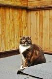 Gato que senta-se na frente da casa de madeira velha Fotos de Stock