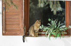 Gato que senta-se na janela Foto de Stock Royalty Free