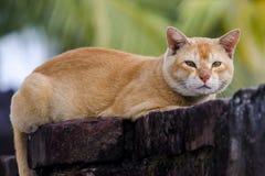 Gato que senta-se na parede imagens de stock