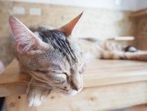 Gato que senta-se na tabela Fotos de Stock