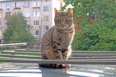 Gato que senta-se no telhado do carro foto de stock royalty free