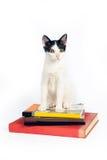 Gato que senta-se para baixo nos livros em um fundo branco Imagens de Stock