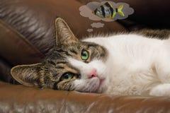 Gato que sonha sobre os peixes Foto de Stock Royalty Free