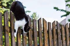 Gato que sube abajo una cerca de madera Fotografía de archivo