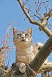 Gato que sube en el árbol Imagenes de archivo