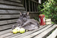Gato que tem o resto no banco Foto de Stock Royalty Free