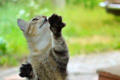 Gato que tenta alcançar algo meu pai que dá o imagem de stock