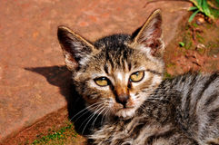 Gato que toma el sol imagenes de archivo