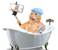 Gato que toma um selfie com um smartphone Foto de Stock Royalty Free