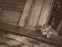 Gato que toma uma sesta Fotografia de Stock Royalty Free