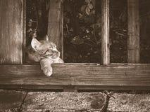 Gato que toma uma sesta Imagens de Stock Royalty Free