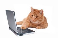 Gato que trabaja en el ordenador Imágenes de archivo libres de regalías