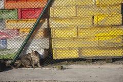 Gato que vive en puerto Foto de archivo libre de regalías