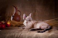 Gato rústico do estilo Imagem de Stock
