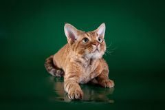 Gato rústico do estilo Foto de Stock Royalty Free