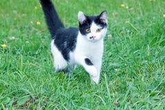 Gato rústico novo no Foto de Stock