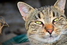 Gato rayado con los ojos verdes Imágenes de archivo libres de regalías