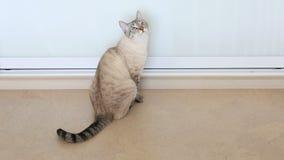 Gato rayado divertido hermoso almacen de metraje de vídeo
