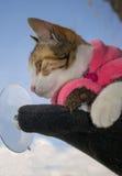 Gato rayado, en la ventana Imagenes de archivo