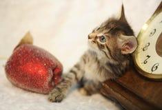 Gato rayado en un interior del ` s del Año Nuevo en una manta mullida blanca con una manzana del juguete y los relojes del vintag Foto de archivo libre de regalías