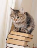Gato rayado en una pila de libros Imagenes de archivo