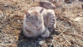 Gato rayado hermoso que se sienta en una playa rocosa almacen de metraje de vídeo