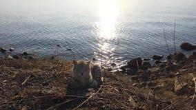 Gato rayado hermoso que se sienta en una playa rocosa almacen de video