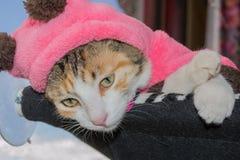 Gato rayado que miente en la hamaca Imagen de archivo libre de regalías