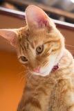 Gato rayado que mira abajo Fotografía de archivo libre de regalías