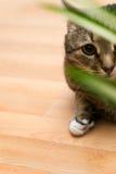 Gato rayado que mira a través de las hojas foto de archivo libre de regalías