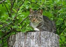 Gato rayado que se sienta en un tocón de árbol Imágenes de archivo libres de regalías