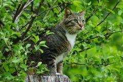 Gato rayado que se sienta en un tocón de árbol Imagen de archivo libre de regalías