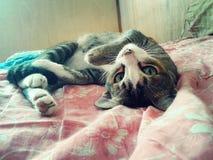 Gato real Fotografia de Stock